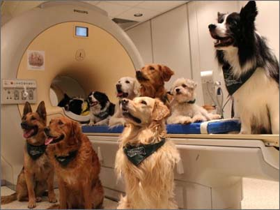 Фото исследований собак МРТ